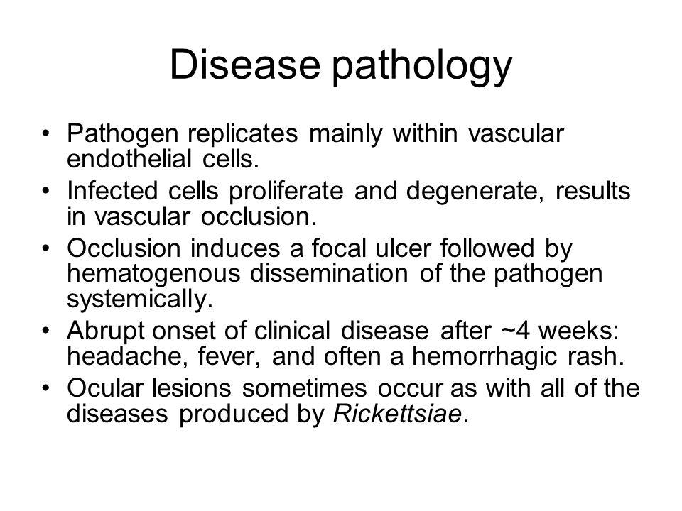 Disease pathology Pathogen replicates mainly within vascular endothelial cells.