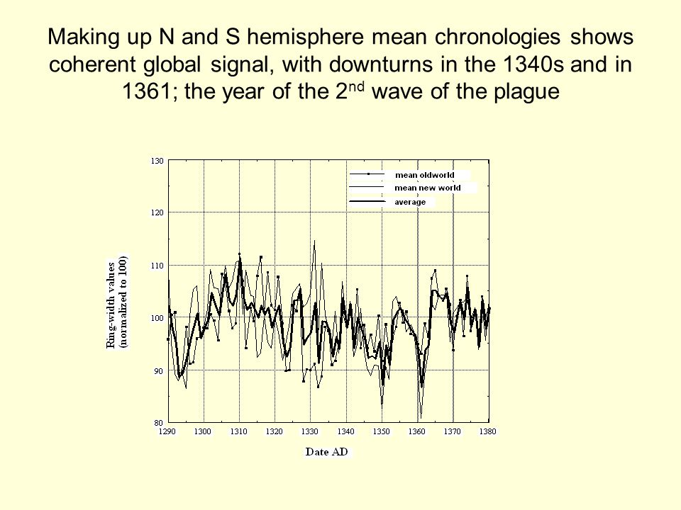 Making up N and S hemisphere mean chronologies shows coherent global signal, with downturns in the 1340s and in 1361; the year of the 2 nd wave of the plague