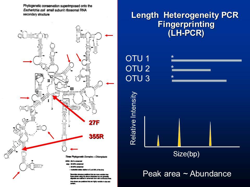 Length Heterogeneity PCR Fingerprinting(LH-PCR) OTU 1 * OTU 2 * OTU 3 *27F 355R Peak area ~ Abundance Size(bp) Relative Intensity