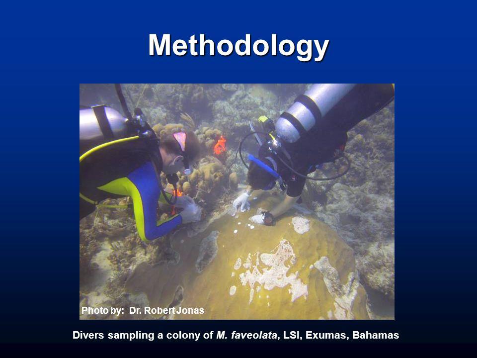Methodology Divers sampling a colony of M. faveolata, LSI, Exumas, Bahamas Photo by: Dr.