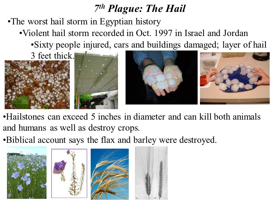 7 th Plague: The Hail The worst hail storm in Egyptian history Violent hail storm recorded in Oct. 1997 in Israel and Jordan Sixty people injured, car