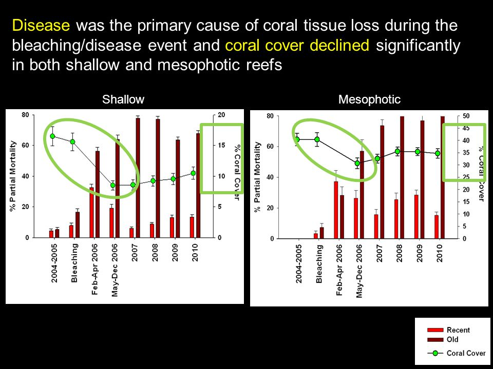 Disease was the primary cause of coral tissue loss during the bleaching/disease event and coral cover declined significantly in both shallow and mesophotic reefs ShallowMesophotic