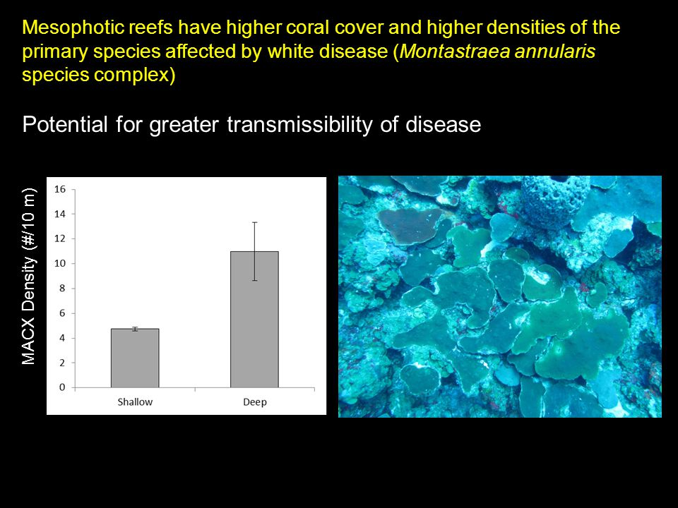 Mesophotic reefs have higher coral cover and higher densities of the primary species affected by white disease (Montastraea annularis species complex) Potential for greater transmissibility of disease MACX Density (#/10 m)