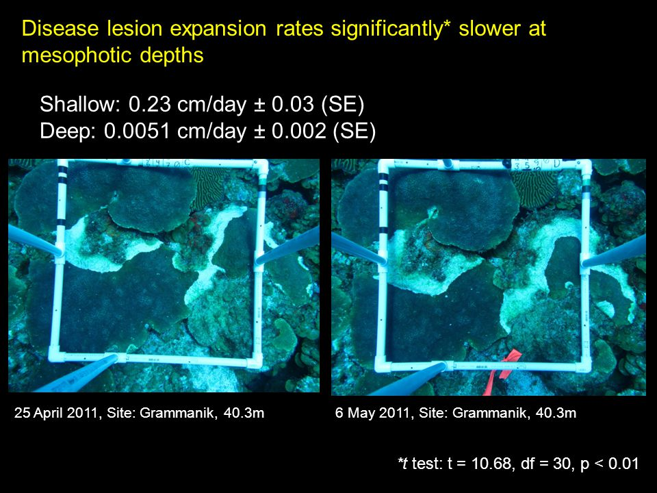 Disease lesion expansion rates significantly* slower at mesophotic depths Shallow: 0.23 cm/day ± 0.03 (SE) Deep: 0.0051 cm/day ± 0.002 (SE) 25 April 2011, Site: Grammanik, 40.3m6 May 2011, Site: Grammanik, 40.3m *t test: t = 10.68, df = 30, p < 0.01