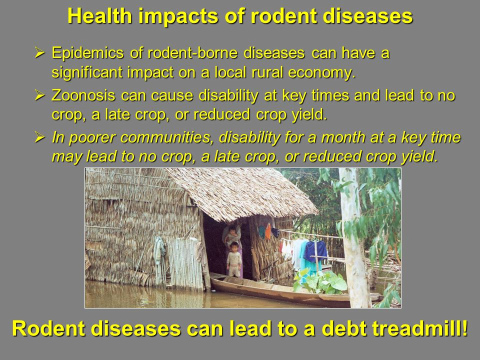 Health impacts of rodent diseases  Epidemics of rodent-borne diseases can have a significant impact on a local rural economy.  Zoonosis can cause di