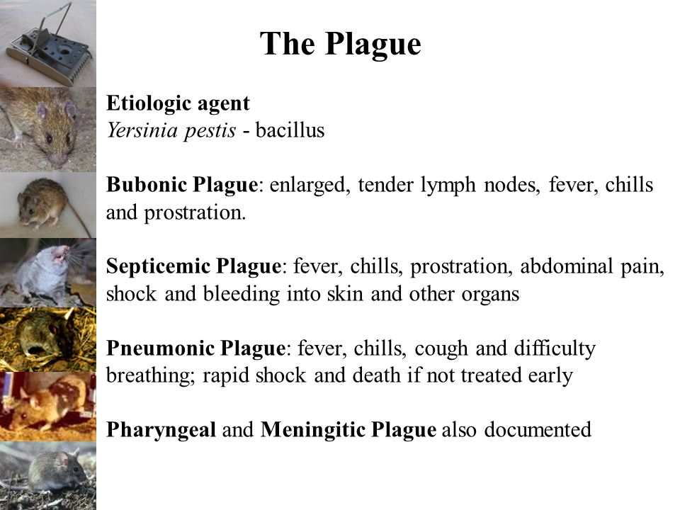The Plague Etiologic agent Yersinia pestis - bacillus Bubonic Plague: enlarged, tender lymph nodes, fever, chills and prostration.