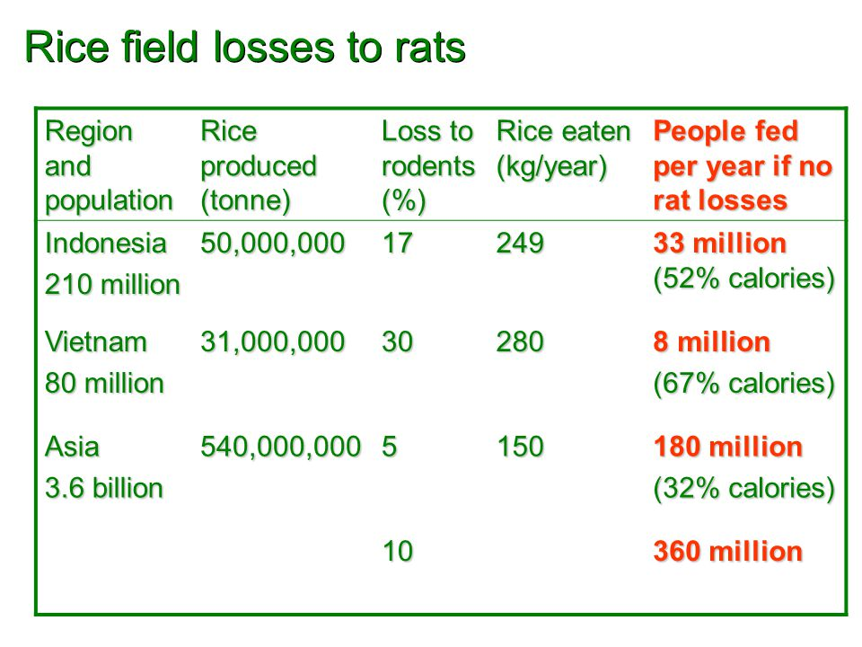Region and population Rice produced (tonne) Loss to rodents (%) Rice eaten (kg/year) People fed per year if no rat losses Indonesia 210 million 50,000,00017249 33 million (52% calories) Vietnam 80 million 31,000,00030280 8 million (67% calories) Asia 3.6 billion 540,000,0005150 180 million (32% calories) 10 360 million Rice field losses to rats