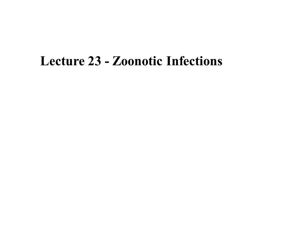 Leptospira interrogans serotype icterohaemorrhagiae.