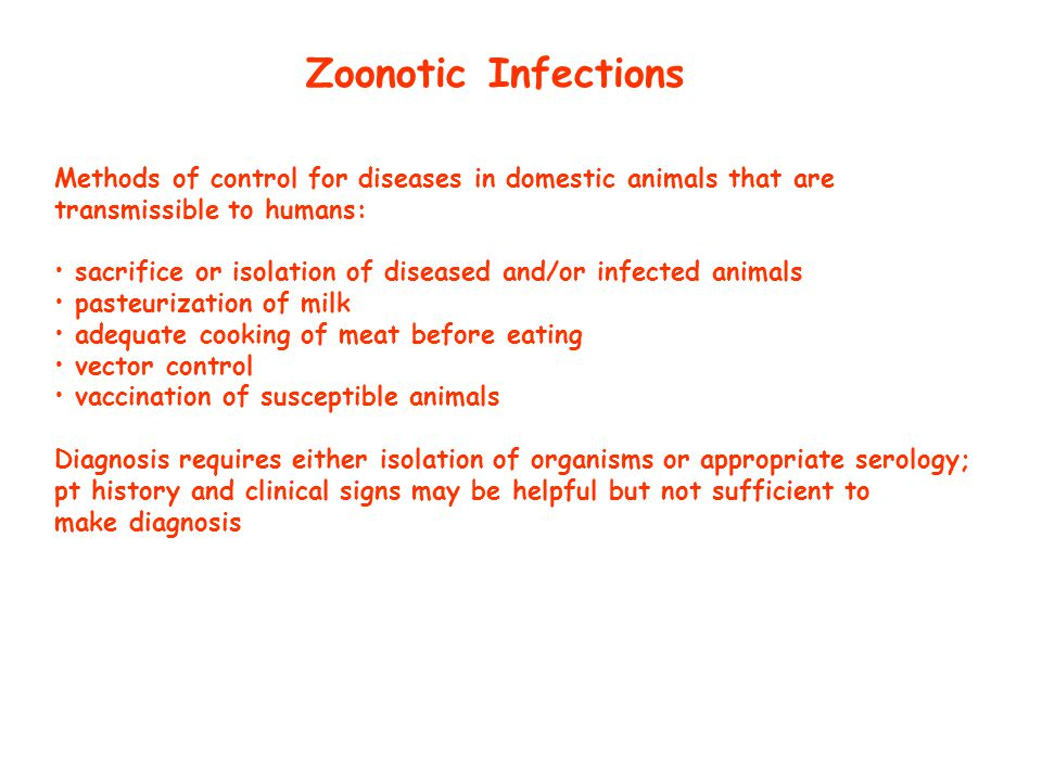 Leptospira Pathogenesis: - zoonosis of rats, dogs, cats, horses, cattle and pigs - animals which develop carrier state shed leptospira in urine (even immunized dogs might shed organisms) - leptospires colonize kidney tubules of animals to produce a chronic carrier state - man becomes infected with contact with urine-contaminated soil and water (often swimming or ingestion of contaminated food or water) - leptospires enter thru mucous membranes or skin abrasions, then spreads thru blood to all tissues - tissue damage is to endothelium of small vessels - mech unknown no LPS or toxins - greatest risk of infection is to those whose occupation brings them in most contact with animals