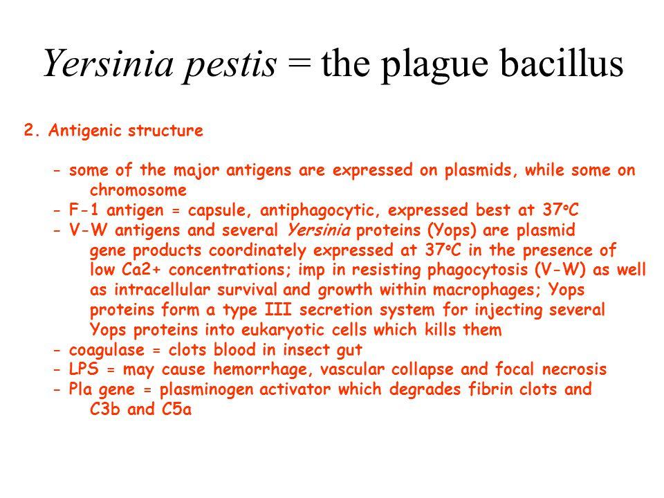 Yersinia pestis = the plague bacillus 3.Clinical manifestations - Y.