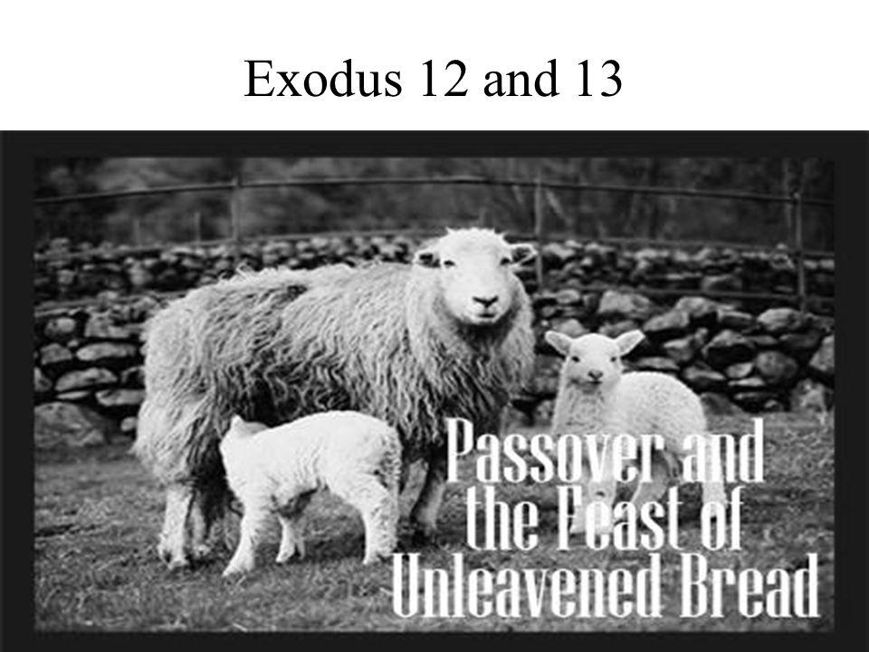 Exodus 12 and 13