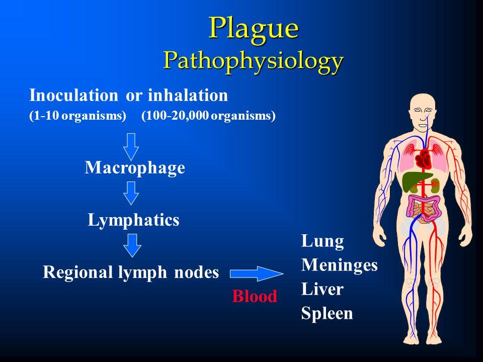 Plague Pathophysiology Lung Meninges Liver Spleen Inoculation or inhalation (1-10 organisms) (100-20,000 organisms) Macrophage Lymphatics Regional lym