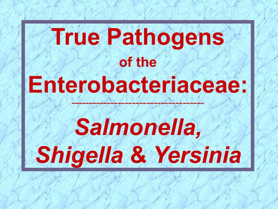 True Pathogens of the Enterobacteriaceae: ~~~~~~~~~~~~~~~~~~~~~~~~~~~~~~~~~~~~~ Salmonella, Shigella & Yersinia