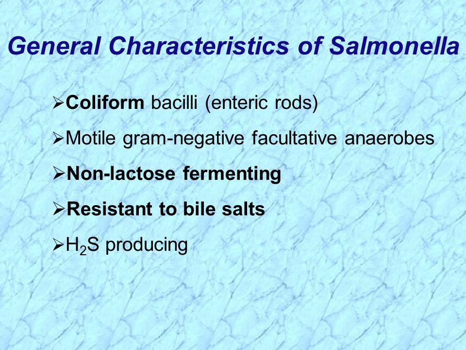  Coliform bacilli (enteric rods)  Motile gram-negative facultative anaerobes  Non-lactose fermenting  Resistant to bile salts  H 2 S producing General Characteristics of Salmonella