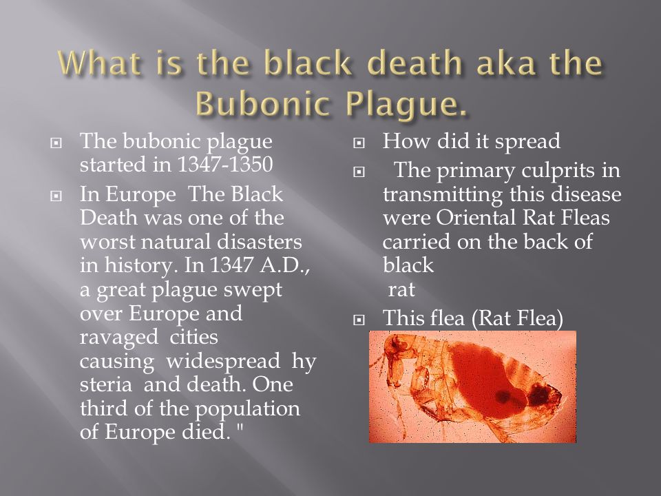  The bubonic plague started in 1347-1350  In Europe The Black Death was one of the worst natural disasters in history. In 1347 A.D., a great plague