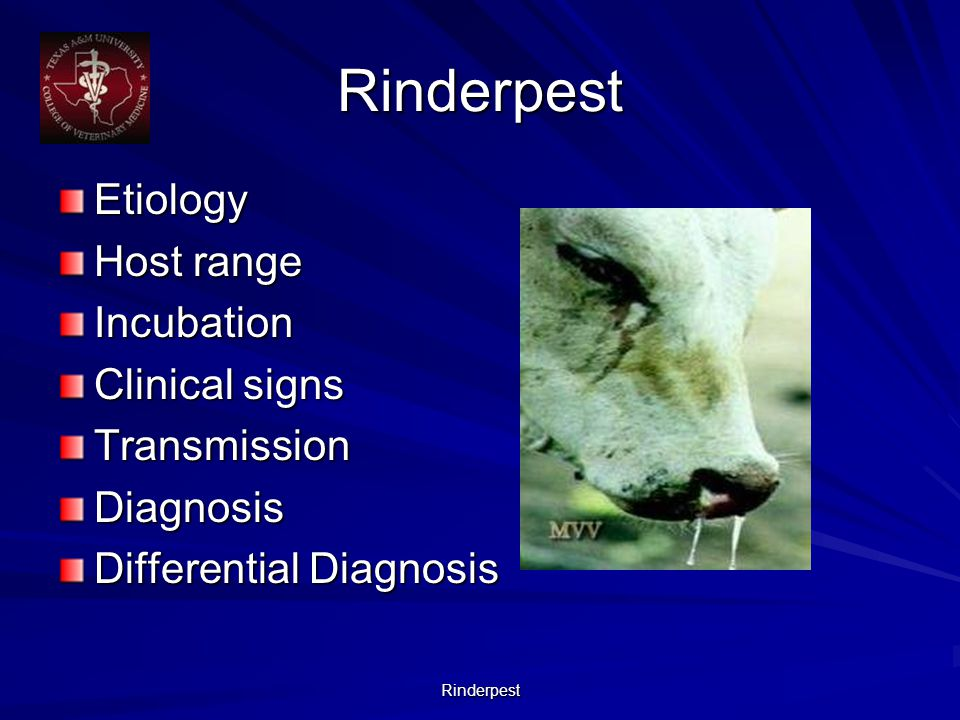 Rinderpest Etiology Host range Incubation Clinical signs TransmissionDiagnosis Differential Diagnosis