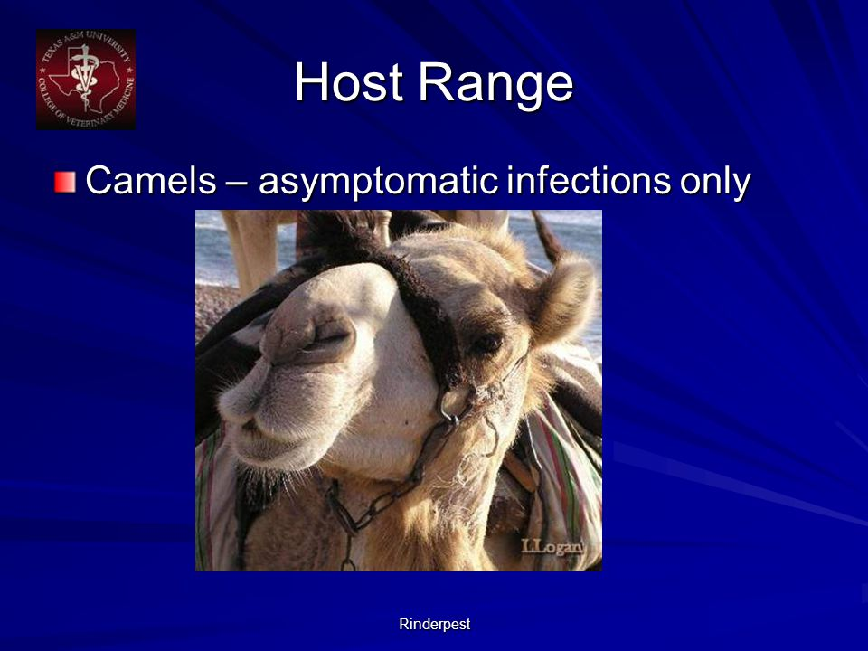 Rinderpest Host Range Camels – asymptomatic infections only