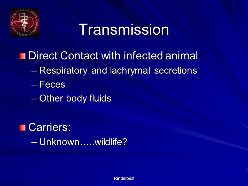Rinderpest Transmission Direct Contact with infected animal –Respiratory and lachrymal secretions –Feces –Other body fluids Carriers: –Unknown…..wildlife