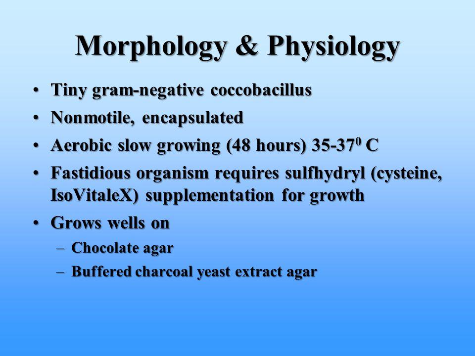 Morphology & Physiology Tiny gram-negative coccobacillusTiny gram-negative coccobacillus Nonmotile, encapsulatedNonmotile, encapsulated Aerobic slow g