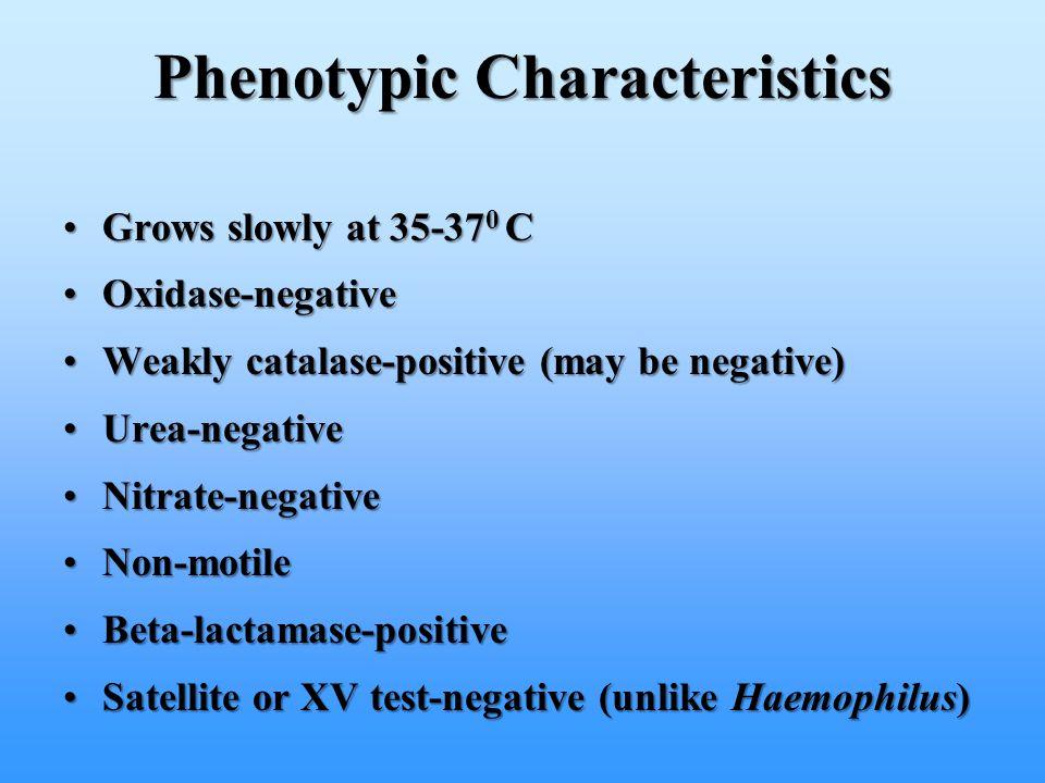 Grows slowly at 35-37 0 CGrows slowly at 35-37 0 C Oxidase-negativeOxidase-negative Weakly catalase-positive (may be negative)Weakly catalase-positive