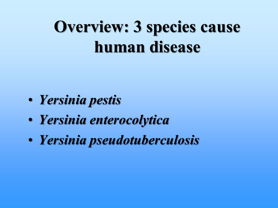 Overview: 3 species cause human disease Yersinia pestisYersinia pestis Yersinia enterocolyticaYersinia enterocolytica Yersinia pseudotuberculosisYersi