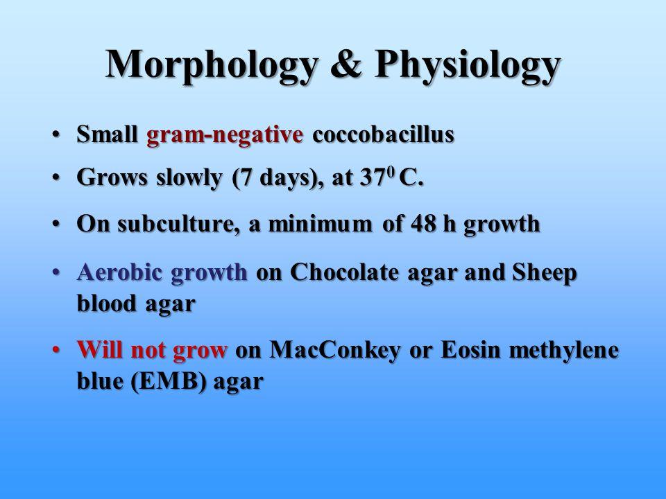 Morphology & Physiology Small gram-negative coccobacillusSmall gram-negative coccobacillus Grows slowly (7 days), at 37 0 C.Grows slowly (7 days), at