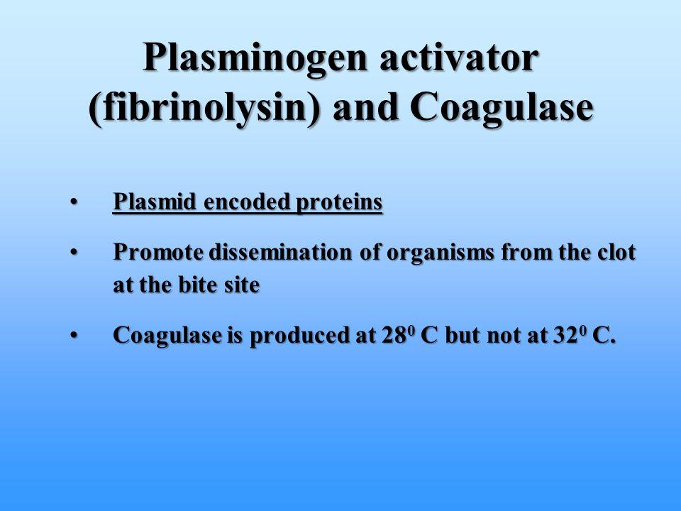 Plasminogen activator (fibrinolysin) and Coagulase Plasmid encoded proteinsPlasmid encoded proteins Promote dissemination of organisms from the clot a
