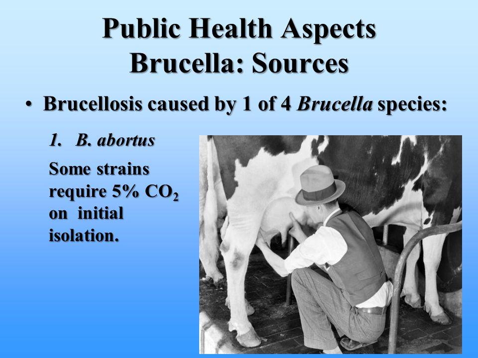 Public Health Aspects Brucella: Sources Brucellosis caused by 1 of 4 Brucella species:Brucellosis caused by 1 of 4 Brucella species: 1.B. abortus Some