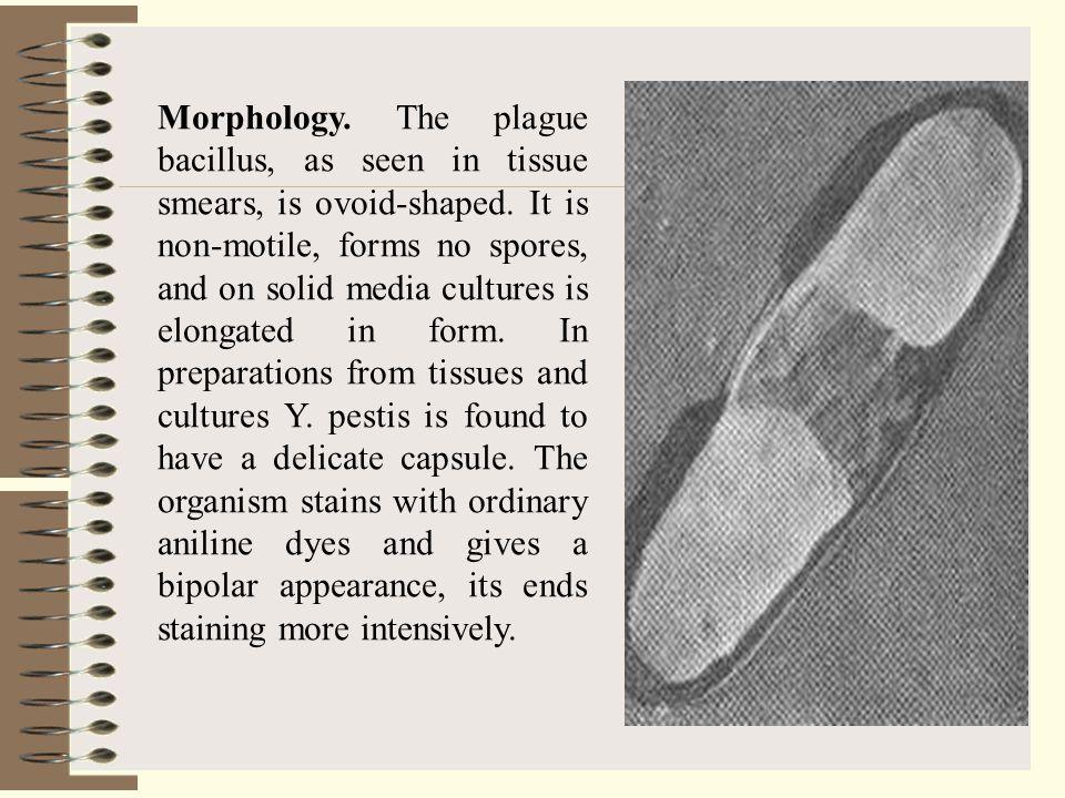 Pathogenicity for animals.