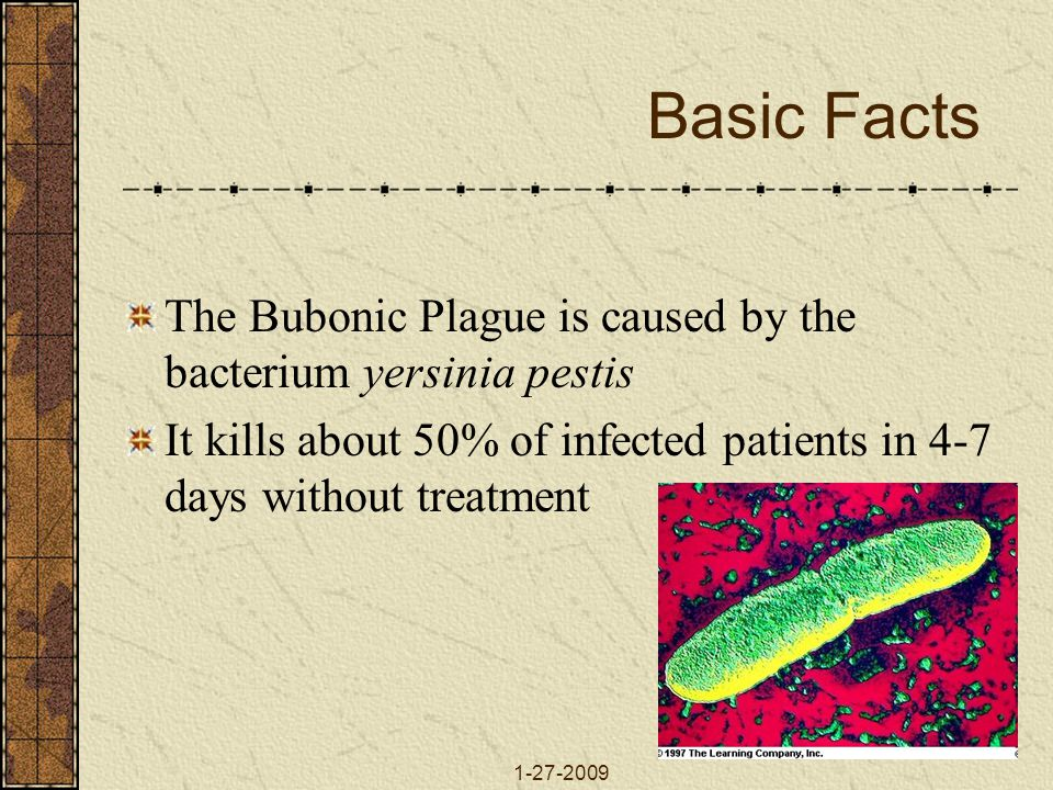 1-27-2009 Basic Facts The Bubonic Plague is caused by the bacterium yersinia pestis It kills about 50% of infected patients in 4-7 days without treatment