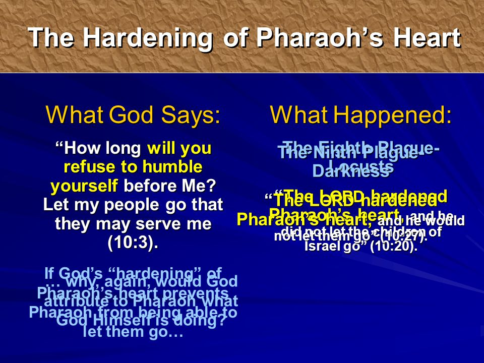 What Happened: The Eighth Plague- Locusts The L ORD hardened Pharaoh's heart, and he did not let the children of Israel go (10:20).