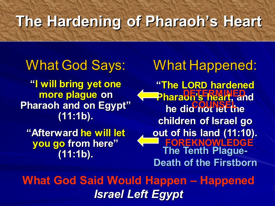 What Happened: The L ORD hardened Pharaoh's heart, and he did not let the children of Israel go out of his land (11:10).