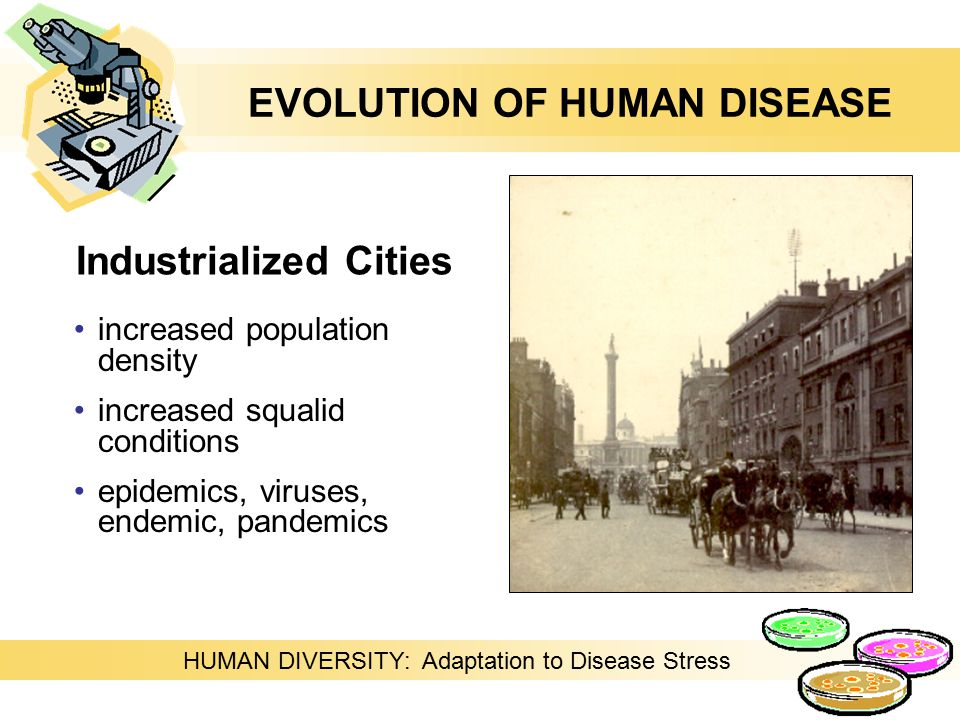 Industrialized Cities increased population density increased squalid conditions epidemics, viruses, endemic, pandemics HUMAN DIVERSITY: Adaptation to Disease Stress EVOLUTION OF HUMAN DISEASE