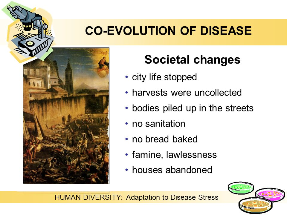 HUMAN DIVERSITY: Adaptation to Disease Stress city life stopped harvests were uncollected bodies piled up in the streets no sanitation no bread baked famine, lawlessness houses abandoned Societal changes CO-EVOLUTION OF DISEASE