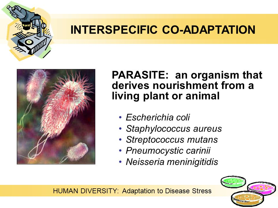 PARASITE: an organism that derives nourishment from a living plant or animal Escherichia coli Staphylococcus aureus Streptococcus mutans Pneumocystic carinii Neisseria meninigitidis HUMAN DIVERSITY: Adaptation to Disease Stress INTERSPECIFIC CO-ADAPTATION
