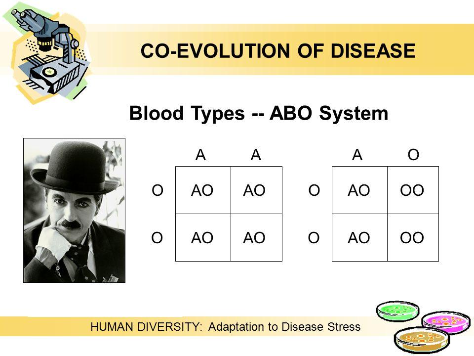 HUMAN DIVERSITY: Adaptation to Disease Stress Blood Types -- ABO System O O AA AO O O AO OO AOOO CO-EVOLUTION OF DISEASE
