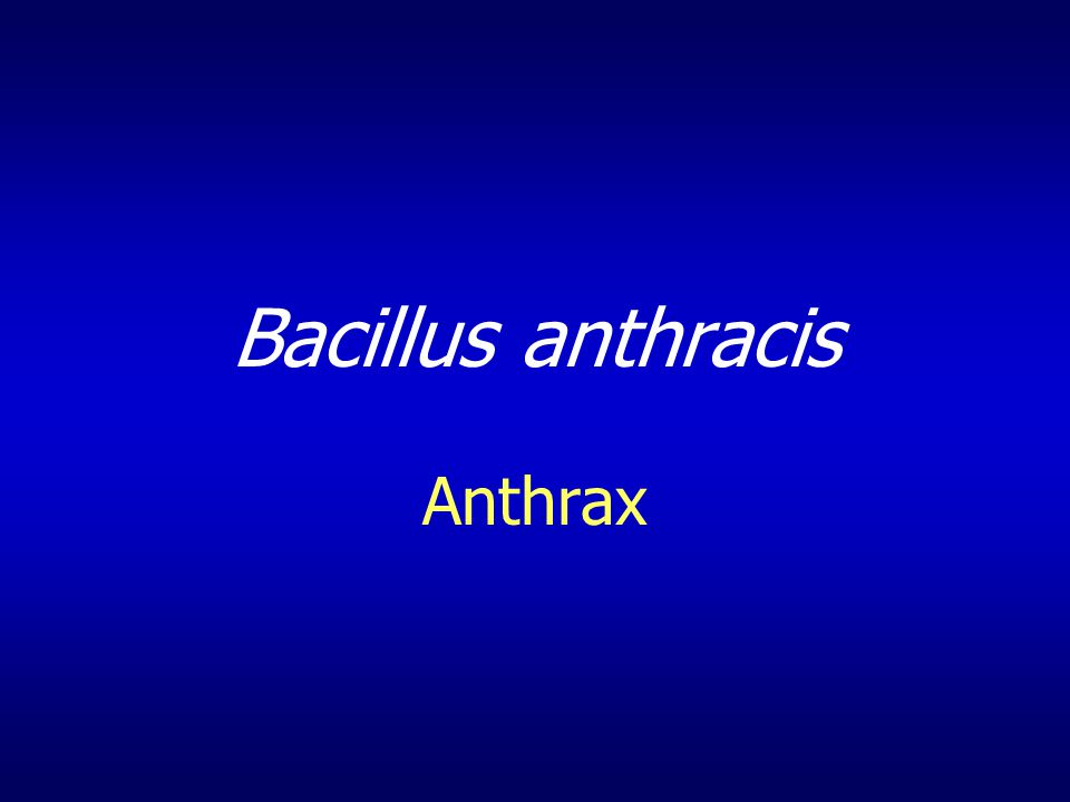 Bacillus anthracis Anthrax