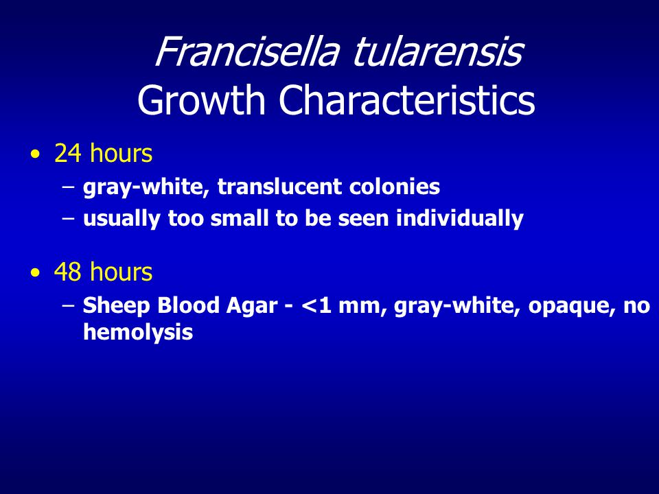 Francisella tularensis Growth Characteristics 24 hours –gray-white, translucent colonies –usually too small to be seen individually 48 hours –Sheep Blood Agar - <1 mm, gray-white, opaque, no hemolysis