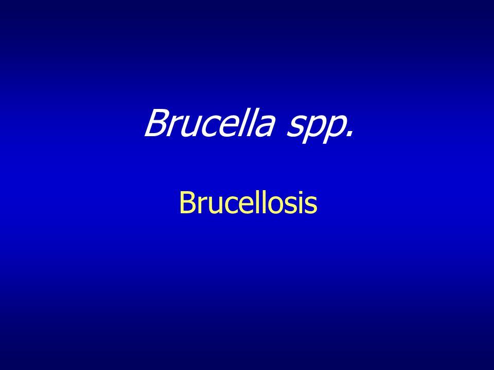 Brucella spp. Brucellosis