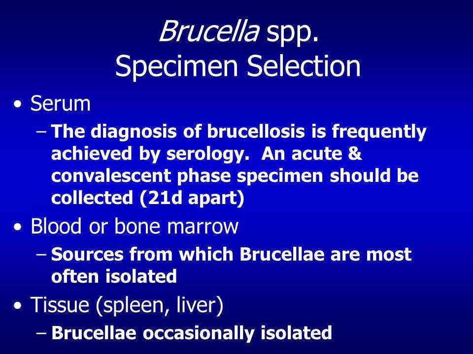 Brucella spp.