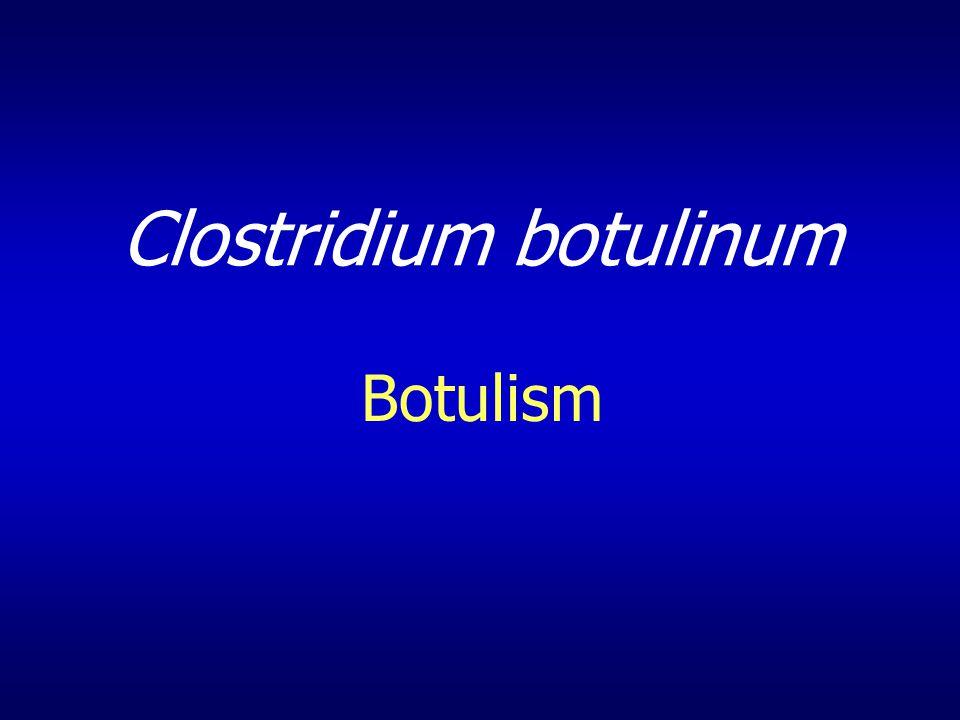 Clostridium botulinum Botulism