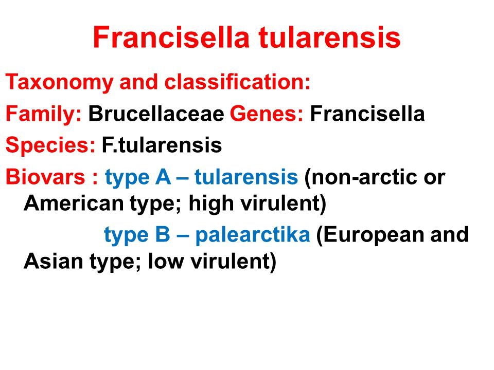 Francisella tularensis Taxonomy and classification: Family: Brucellaceae Genes: Francisella Species: F.tularensis Biovars : type A – tularensis (non-a
