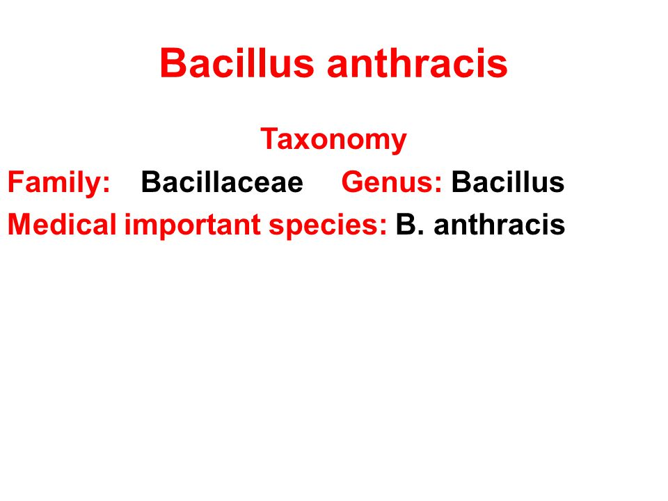 Bacillus anthracis Taxonomy Family:BacillaceaeGenus: Bacillus Medical important species: B. anthracis