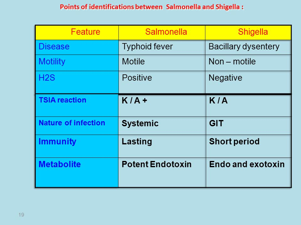 Points of identifications between Salmonella and Shigella : 19