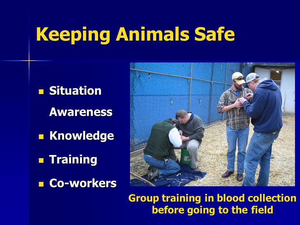 Keeping Animals Safe Situation Awareness Situation Awareness Knowledge Knowledge Training Training Co-workers Co-workers Group training in blood colle