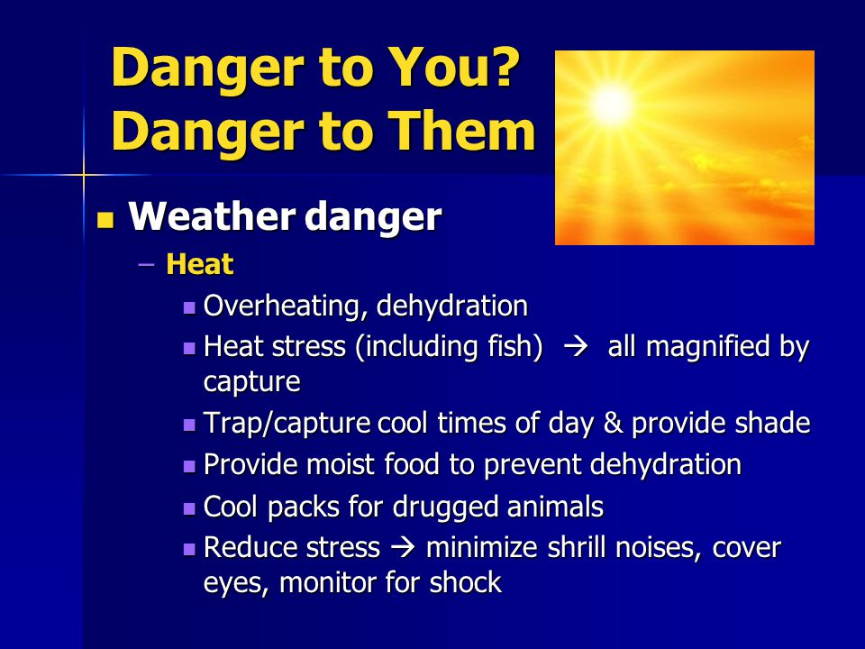 Danger to You? Danger to Them Weather danger Weather danger –Heat Overheating, dehydration Overheating, dehydration Heat stress (including fish)  all