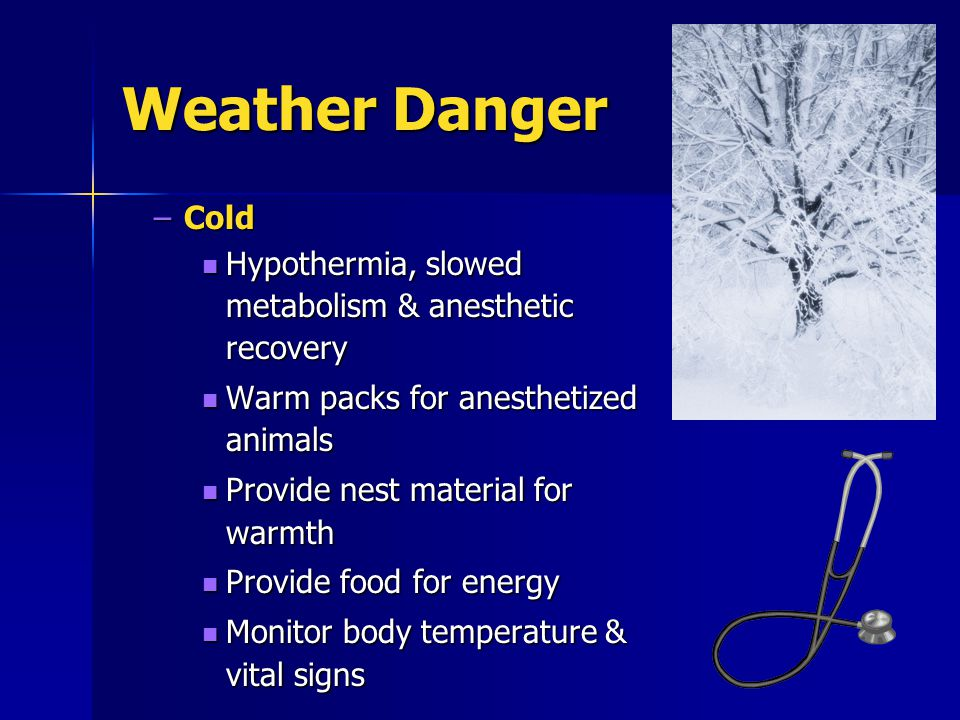 Weather Danger –Cold Hypothermia, slowed metabolism & anesthetic recovery Hypothermia, slowed metabolism & anesthetic recovery Warm packs for anesthetized animals Warm packs for anesthetized animals Provide nest material for warmth Provide nest material for warmth Provide food for energy Provide food for energy Monitor body temperature & vital signs Monitor body temperature & vital signs