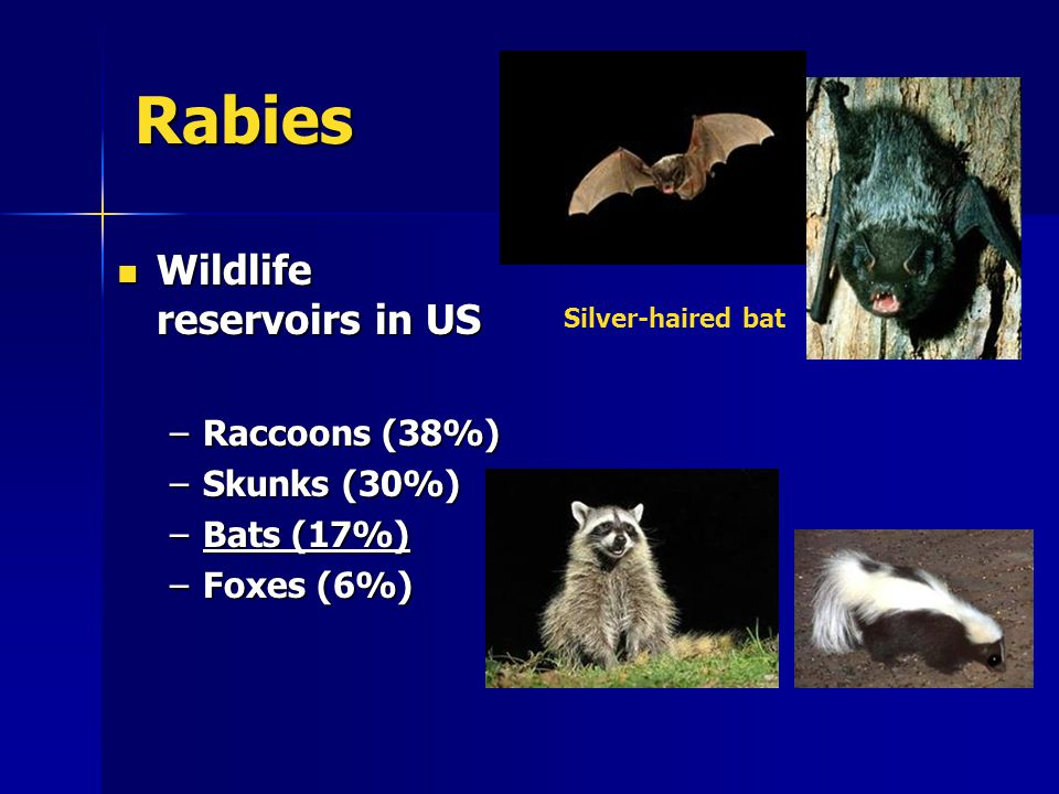 Rabies Wildlife reservoirs in US Wildlife reservoirs in US –Raccoons (38%) –Skunks (30%) –Bats (17%) –Foxes (6%) Silver-haired bat
