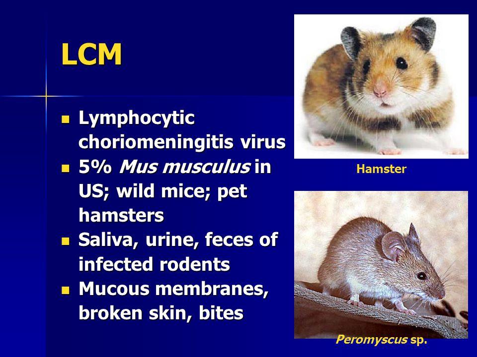 LCM Lymphocytic choriomeningitis virus Lymphocytic choriomeningitis virus 5% Mus musculus in US; wild mice; pet hamsters 5% Mus musculus in US; wild mice; pet hamsters Saliva, urine, feces of infected rodents Saliva, urine, feces of infected rodents Mucous membranes, broken skin, bites Mucous membranes, broken skin, bites Hamster Peromyscus sp.