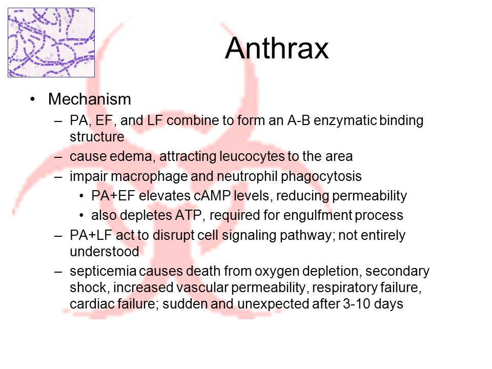 Anthrax Routes of infection –Cutaneous: boil, then eschar, then necrotic ulcer; painless; minor lethality –Gastrointestinal: severe gastrointestinal irritability; highly lethal route –Pulmonary: induces flu-like symptoms; most lethal route Treatment –Vaccination for potential contact, given yearly and at least 4 weeks prior to exposure –Antibiotics (eg penicillin) for inhalation victims, given within 24 hours –Cutaneous inoculation has minor lethality, usually none with antibiotics Cleanup –Spores are hardy, resistant to dessication, heat, extreme chemicals, and natural decay –CDC and BW protocol recommend steam sterilization or burning for at least 30 minutes –other approved chemicals may not destroy them all